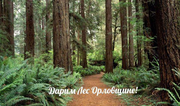 дарим лес
